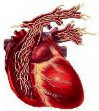 Monash Veterinary Clinic   Heartworm Advice