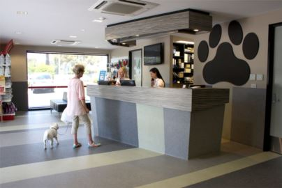 Expert Friendly Amp Affordable Pet Care At Monash Vet Clinic